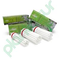 lr_ilubom9016_ilubom9018_ilubom9019_pure_light_cfl_greenpower_1